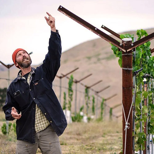 regenerative_wine
