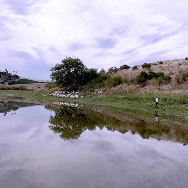 reservoir jess herding rehydrate CA--600x600